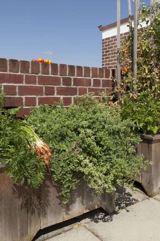 Containers Rooftop Terrace Gardens Bost Horticulture